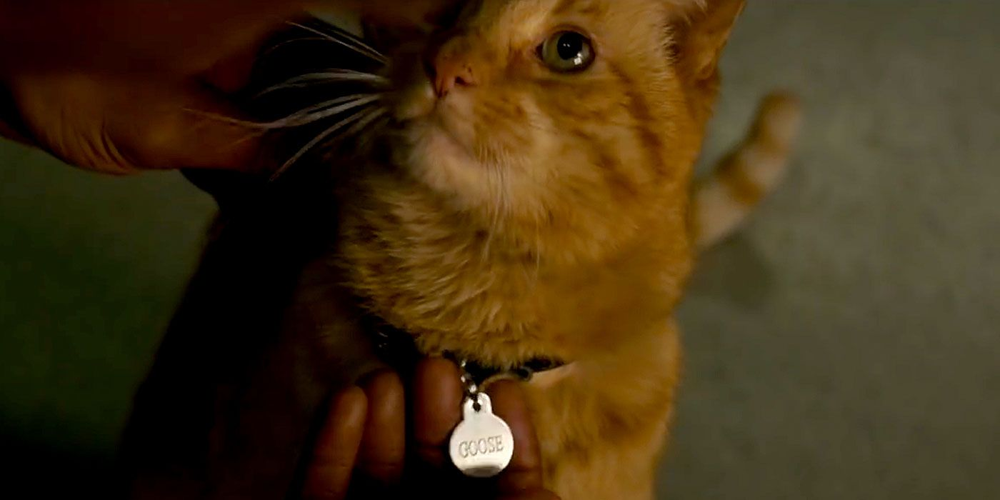Captain Marvel S Pet Goose Is Definitely Not Fully A Cat